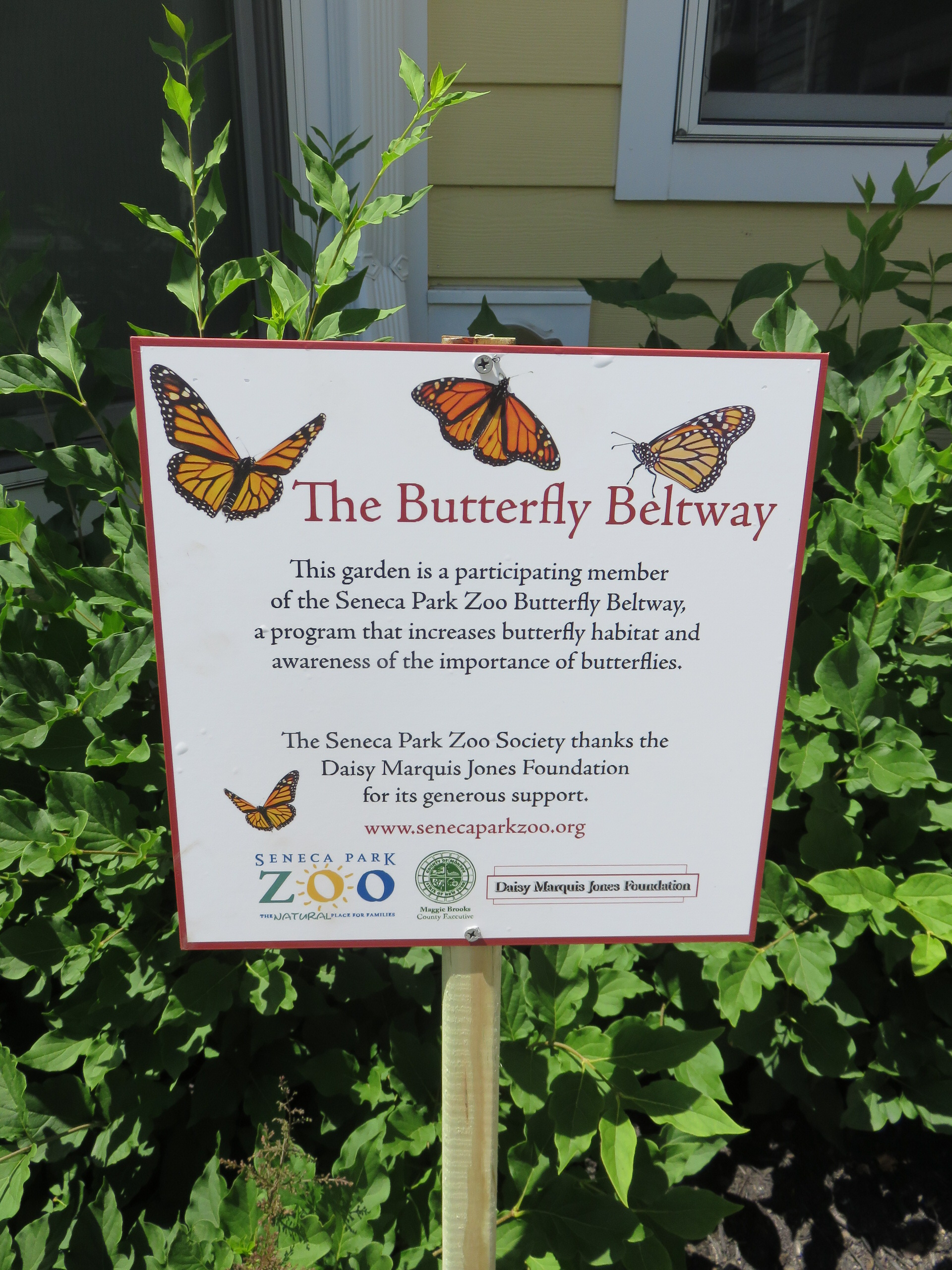 The butterfly Beltway Seneca Park Zoo sign at DePaul