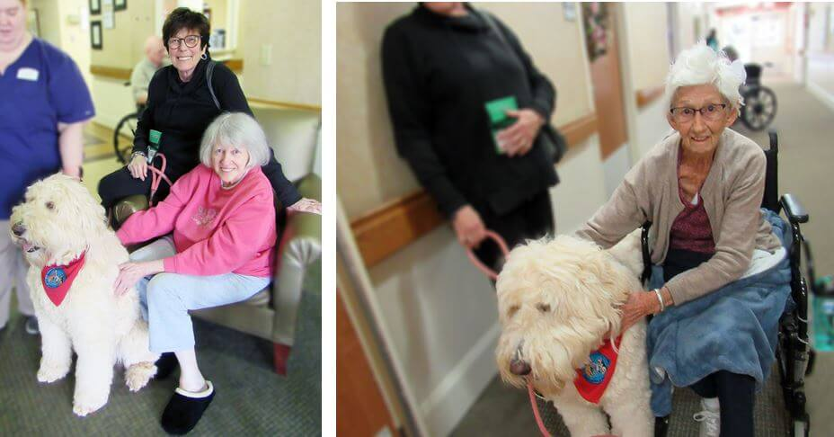 Wexford House Pet Therapy